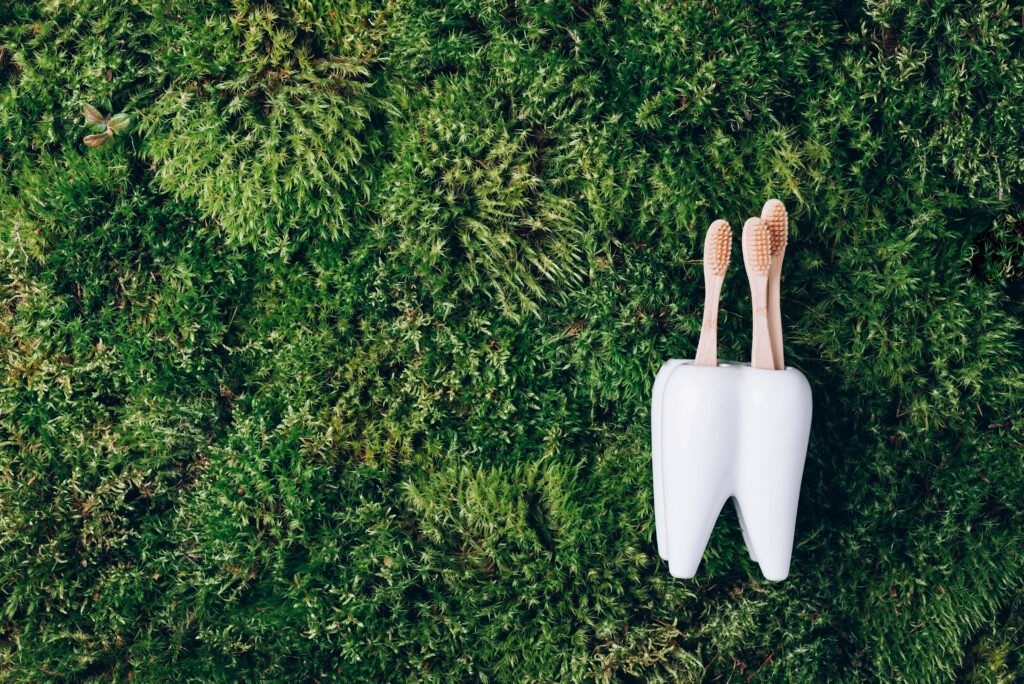 Toothbrush stand shaped like primary molar tooth with toothbrushes on green moss background. Top view. Copy space. Signboard for stomatology, dentist office, dental care clinic. Dental health concept